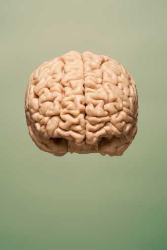 Brain「Frontal image of brain floating on  background」:スマホ壁紙(11)