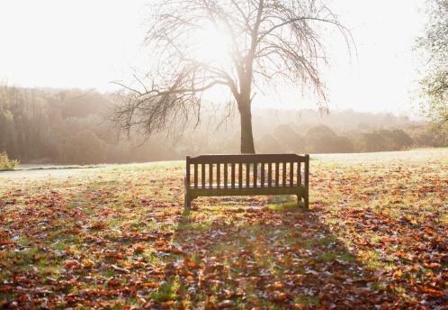 公園「秋の公園のベンチ」:スマホ壁紙(13)
