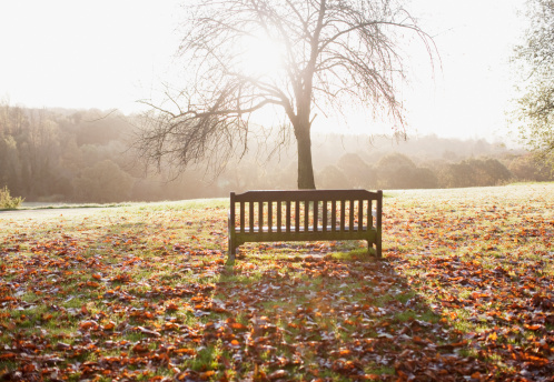 Public Park「Park bench in autumn」:スマホ壁紙(6)