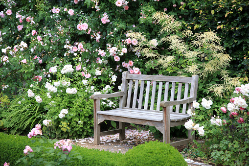 Formal Garden「Park bench sitting vacant near bushes of flowers」:スマホ壁紙(16)