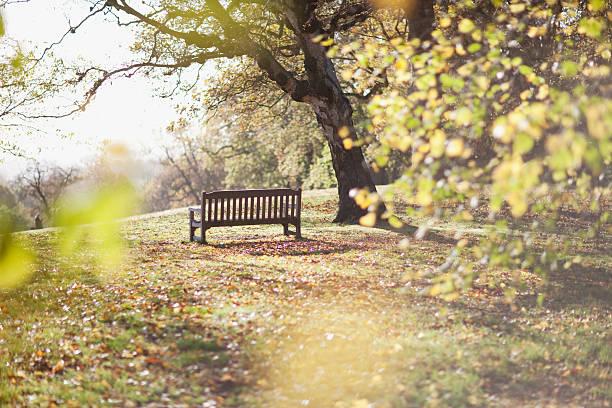 公園のベンチに秋の解除:スマホ壁紙(壁紙.com)