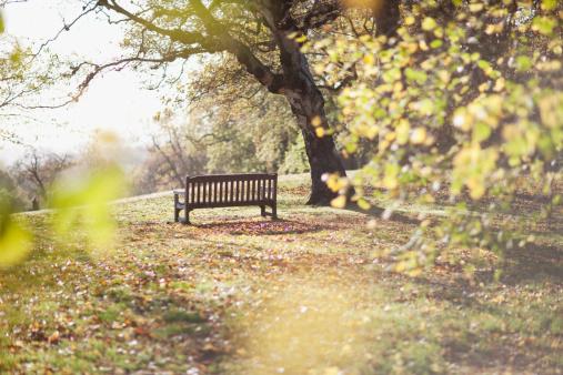 秋「公園のベンチに秋の解除」:スマホ壁紙(18)
