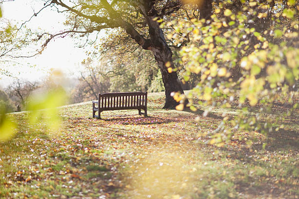 Park bench in clearing in autumn:スマホ壁紙(壁紙.com)