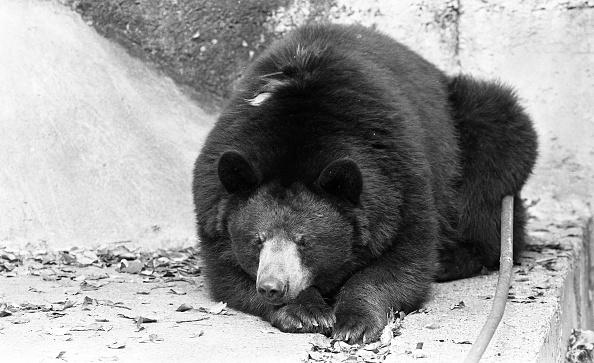 City Life「Dublin Zoo 1994」:写真・画像(6)[壁紙.com]