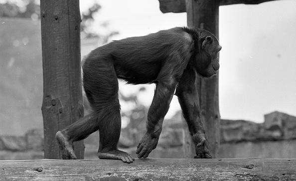 Variation「Dublin Zoo 1994」:写真・画像(2)[壁紙.com]