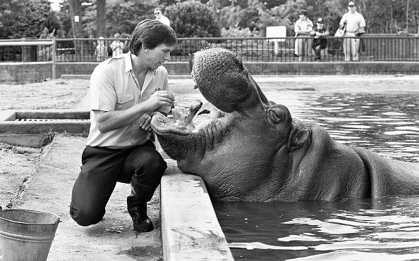 City Life「Dublin Zoo 1994」:写真・画像(19)[壁紙.com]