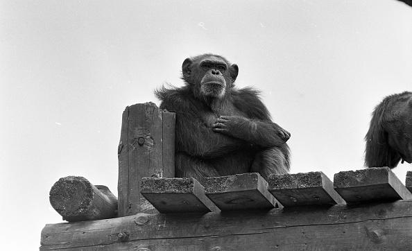 Variation「Dublin Zoo 1994」:写真・画像(11)[壁紙.com]