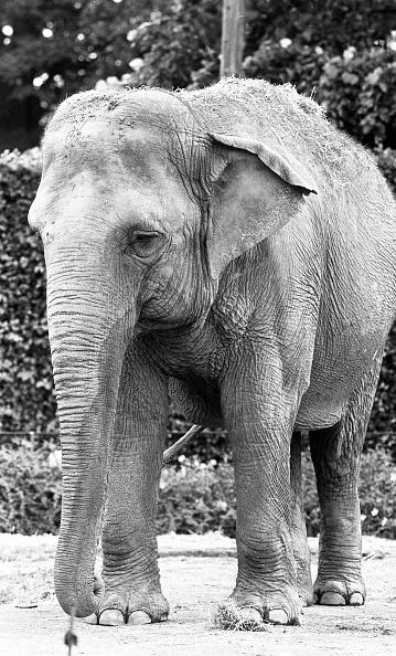 City Life「Dublin Zoo 1994」:写真・画像(4)[壁紙.com]