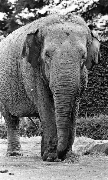 City Life「Dublin Zoo 1994」:写真・画像(5)[壁紙.com]