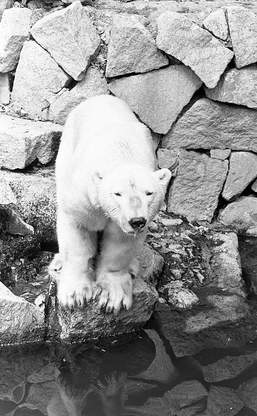 City Life「Dublin Zoo 1994」:写真・画像(9)[壁紙.com]
