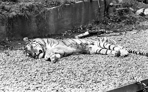 City Life「Dublin Zoo 1994」:写真・画像(3)[壁紙.com]
