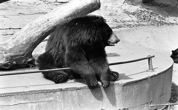 City Life「Dublin Zoo 1994」:写真・画像(7)[壁紙.com]