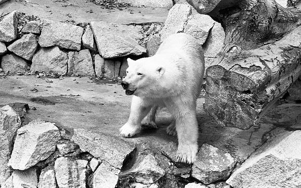 City Life「Dublin Zoo 1994」:写真・画像(17)[壁紙.com]