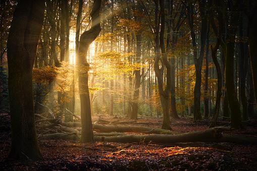 Ecosystem「Autumn sun shining through forest」:スマホ壁紙(17)