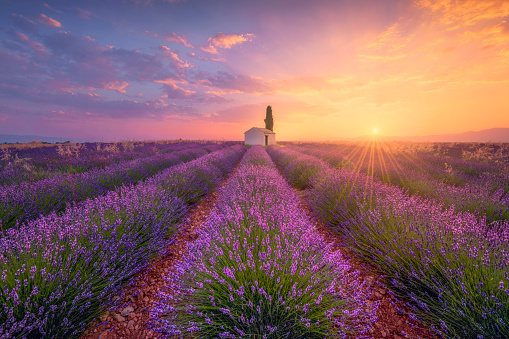 キッチュ「France, Alpes-de-Haute-Provence, Valensole, lavender field at twilight」:スマホ壁紙(0)