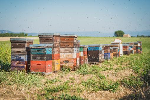 Alpes-de-Haute-Provence「France, Alpes-de-Haute-Provence, beehives on field」:スマホ壁紙(4)