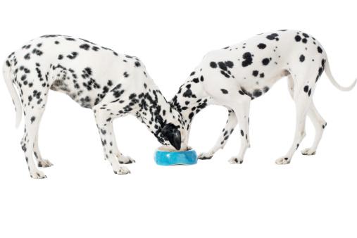 Eating「Two Dalmatians eating」:スマホ壁紙(11)