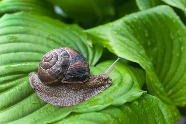 Snail:スマホ壁紙(壁紙.com)