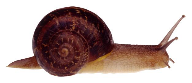 ナメクジ「Snail」:スマホ壁紙(11)