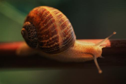 snails「Snail」:スマホ壁紙(16)