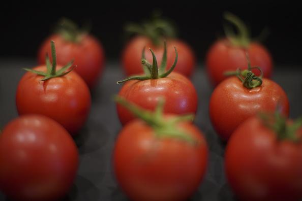 Tomato「Giant Vegetables At Harrogate Autumn Show」:写真・画像(3)[壁紙.com]
