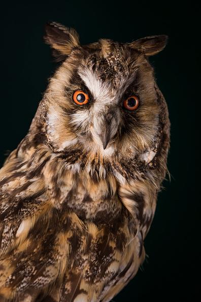 鳥「The Grant Museum Undertake Conservation Work On Historic Taxidermy Collection」:写真・画像(17)[壁紙.com]