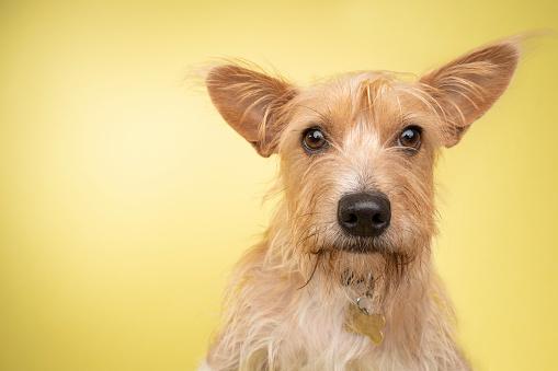 Pets「Rescue Animal - Cairn Terrier/Corgi mix」:スマホ壁紙(19)