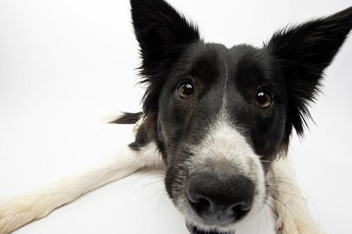Amanda Foundation「Rescue Animal - Border Collie」:スマホ壁紙(7)