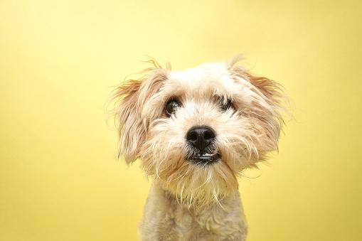 Healing「Rescue Animal - Poodle/Terrier mix」:スマホ壁紙(11)