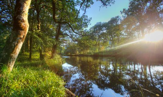 アーン川「Sunlit river bank」:スマホ壁紙(4)