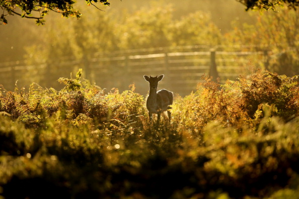 Bracken「Autumn Colours Can Be Seen Throughout The UK」:写真・画像(9)[壁紙.com]