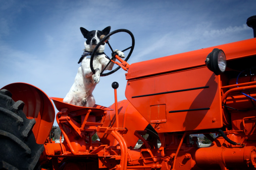 Fun「Tractor dog」:スマホ壁紙(14)