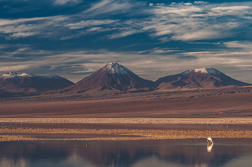 Animal「Sole pink flamingo in Laguna Chaxa, Atacama Salt Flats, with snow-capped volcanoes in the background near San Pedro de Atacama, Chile」:スマホ壁紙(2)