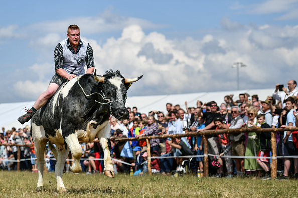 Offbeat「Camels Compete Against Oxen In Bavarian Race」:写真・画像(16)[壁紙.com]