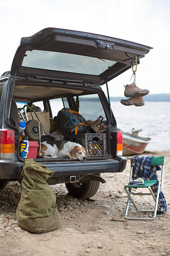 Adirondack Mountains「Dog Relaxing On The Boot Of A Car On A Road Trip In The Adirondacks」:スマホ壁紙(12)