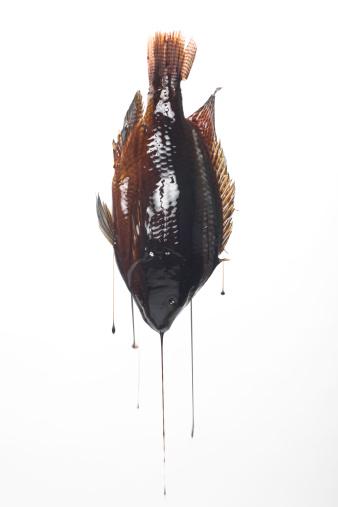 ガラス「Fish dripping motor oil」:スマホ壁紙(10)