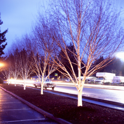Car Dealership「Birch trees against car lights at dusk, Vashon Island, Washington. USA」:スマホ壁紙(10)