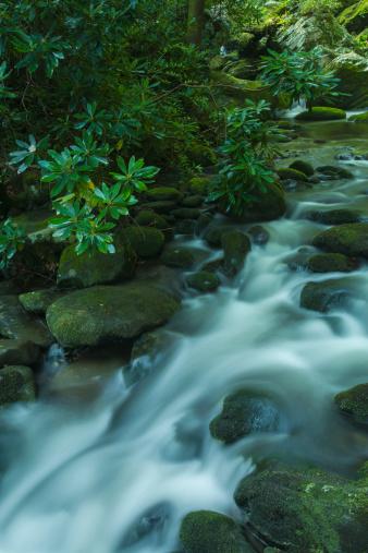 Roaring Fork River「Roaring fork, Great Smoky Mountains」:スマホ壁紙(18)