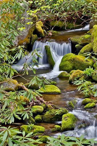 Roaring Fork River「Roaring Fork creek moss and rocks along stream」:スマホ壁紙(9)