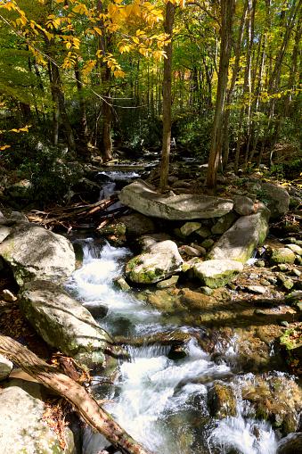 Roaring Fork River「Roaring Fork Motor Nature Trail in autumn, Smoky Mountains National Park」:スマホ壁紙(8)