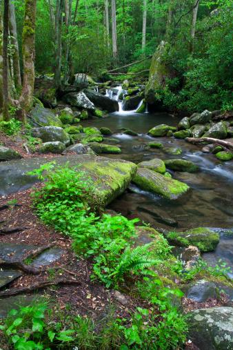 Roaring Fork River「Roaring Fork」:スマホ壁紙(17)