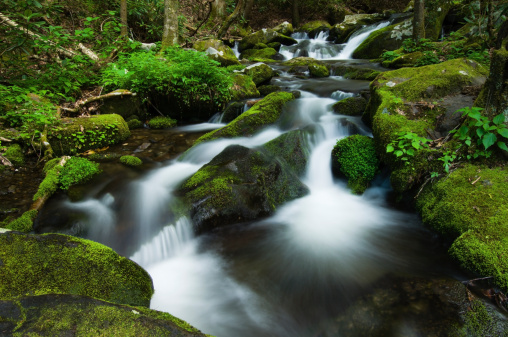 Roaring Fork River「Roaring Fork River cascades and lush spring moss.」:スマホ壁紙(17)