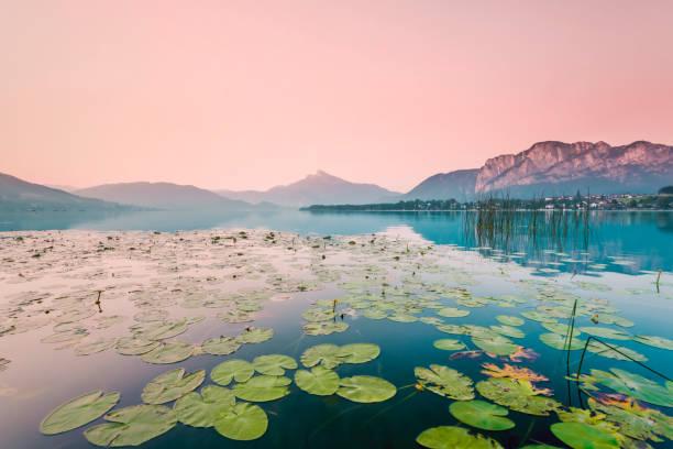Austria, Lake Mondsee, Water Lilies in the morning:スマホ壁紙(壁紙.com)