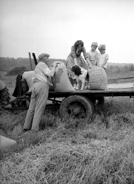 Grass Family「Loading Barley」:写真・画像(4)[壁紙.com]