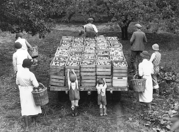 Harvesting「Apples」:写真・画像(14)[壁紙.com]