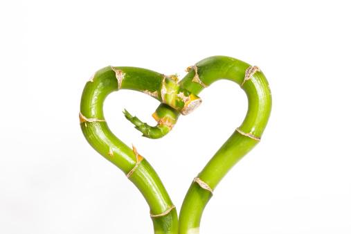恋愛運「Lucky Bamboo forming a heart shape」:スマホ壁紙(8)