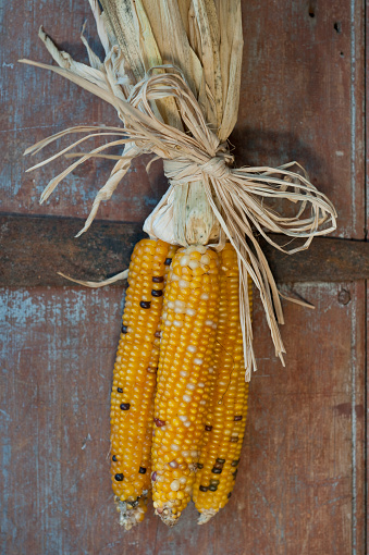 Indian Corn「Autumn decoration」:スマホ壁紙(14)