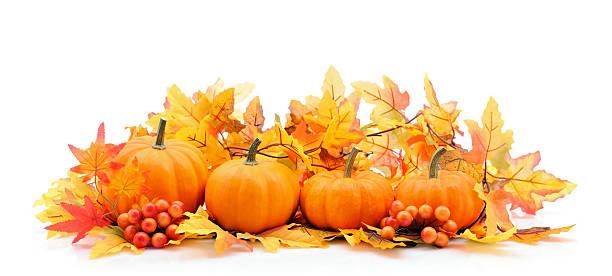 秋の装飾でホワイト、コピースペース付き:スマホ壁紙(壁紙.com)