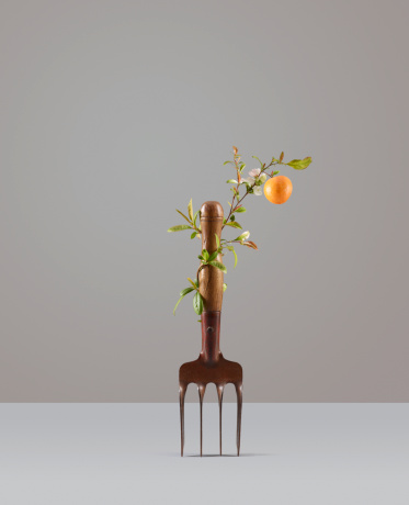 Horticulture「Orange plant growing around garden fork」:スマホ壁紙(14)