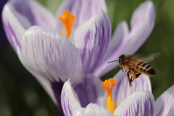 Pollination「Spring Comes To The UK Capital」:写真・画像(5)[壁紙.com]